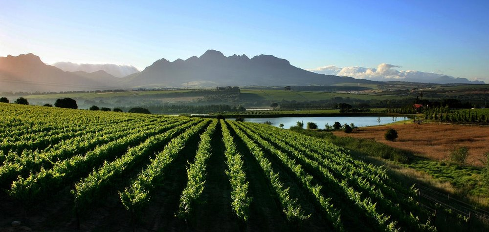 Cape-Winelands.jpg