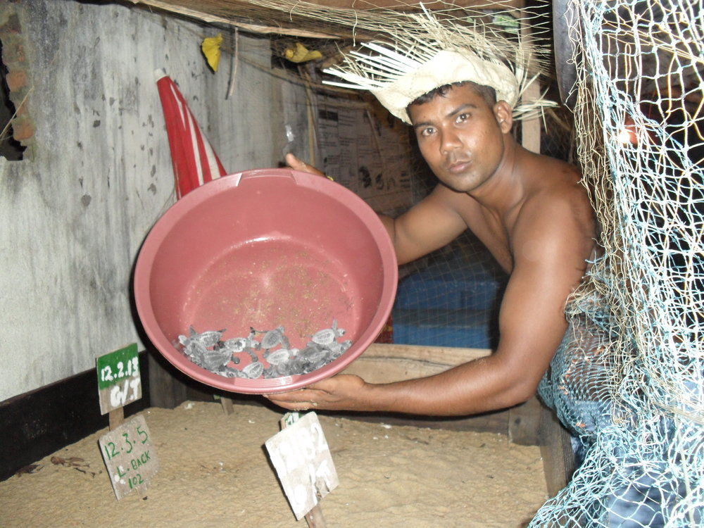 Milan's dedication to the turtles that nest on the western coast has saved literally tens of thousands of eggs from predation over 12 years, and seen the release of tens of thousands of hatchlings. His ability to continue the work upon the beaches that turtles have nested on for millennia needs to continue. Support Milan so that he can develop the hatchery and sanctuary into something that provides  him an income so that he can continue to save the turtles for us all.
