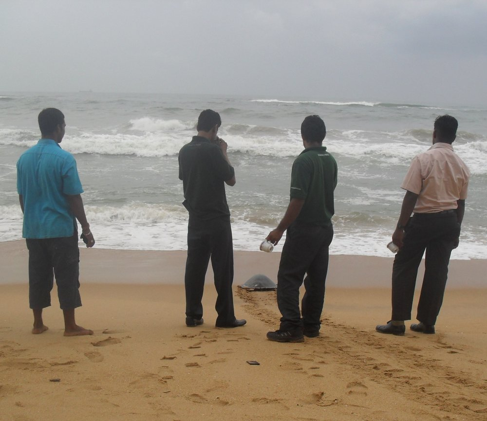In order to support themselves and their family, Milan and his wife run a cafe at the turtle sanctuary. Help us to help Milan continue his vital role as custodian and guardian of the turtles' future.