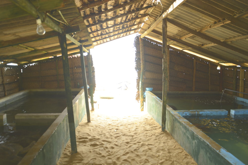 These are the older tanks, which survived the 2015 storm, and Give A Fig replaced one that was washed away (off camera) at a cost of £350.