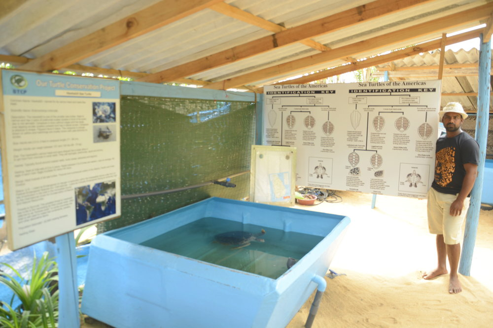 These new tanks have been provided by a donor. Give A Fig Volunteering are seeking your help to ensure the long term viability of Milan's vital work on this coast.