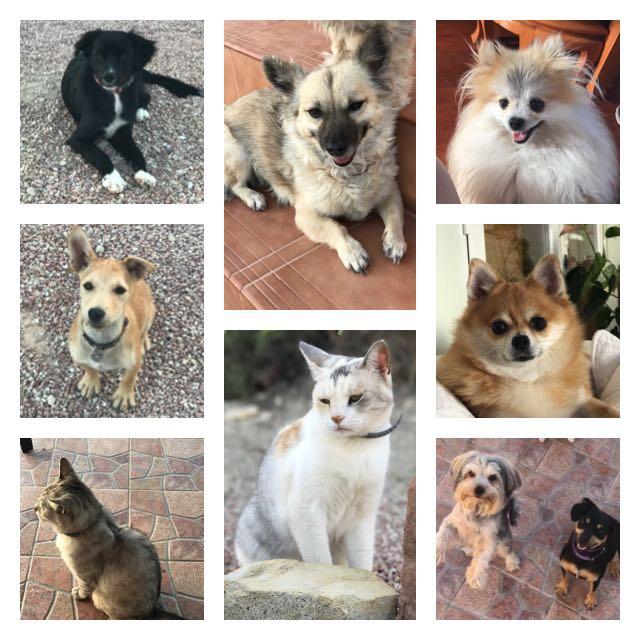 Bibe, Roux, Elmo, Yogi, Axel, Zoey, Raleigh, Rosie & Blu