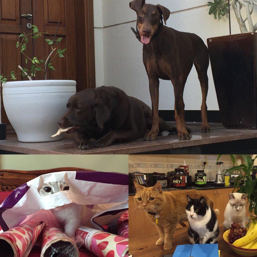 Coco, Rose, Chompy, Pumpkin & Hobbs