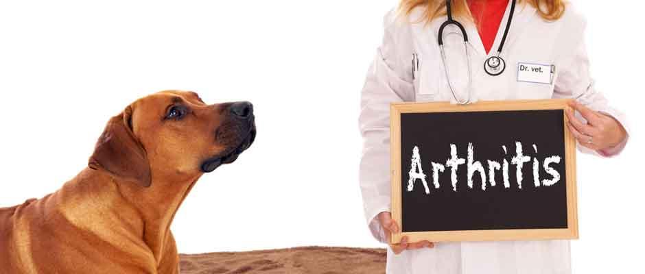 Dog-Arthritis-Symptoms-Prevention-and-Treatment.jpg