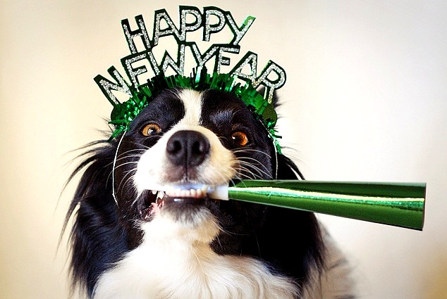 12.31.14-New-Years-Dogs1.jpg