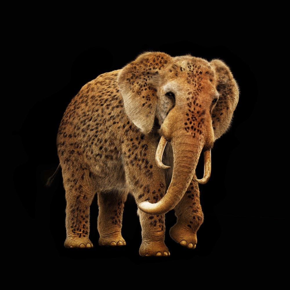 P_3285_Elephant_V005.jpg