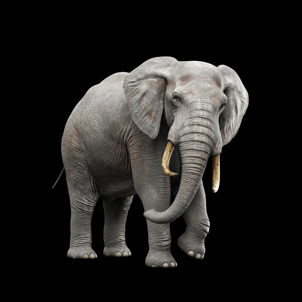 Elephant_V005_NO_FUR.jpg