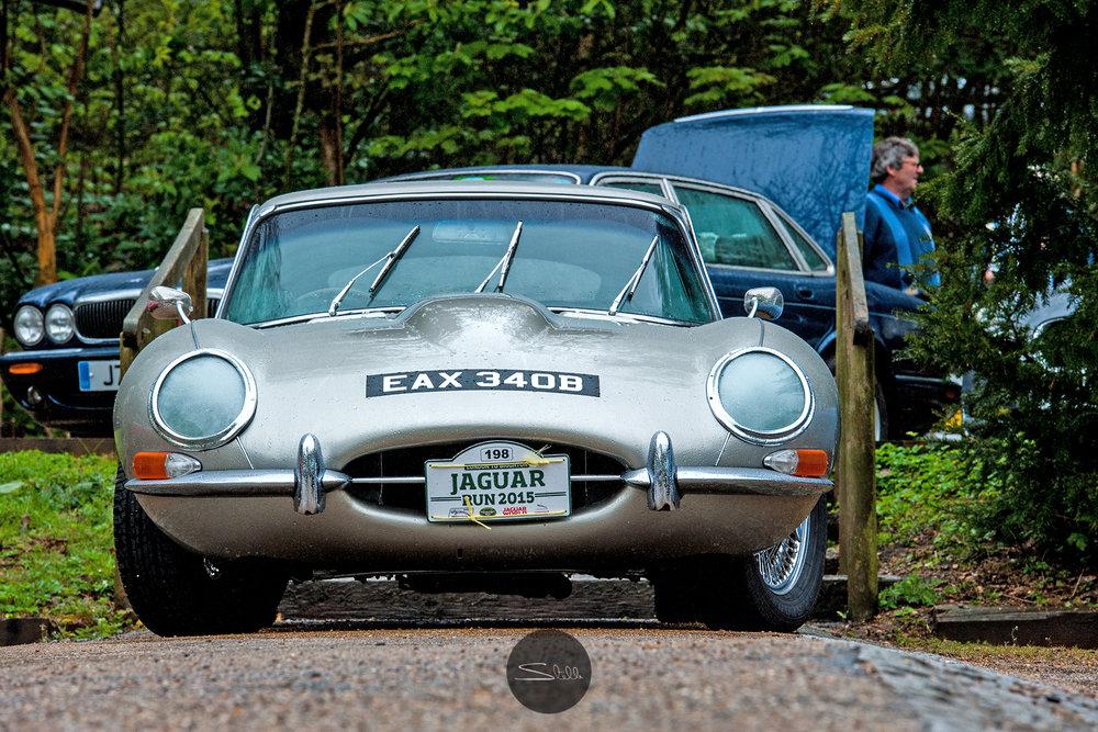 Stella Scordellis Jaguar Car Run 2015 16 Watermarked.jpg