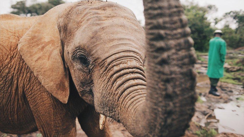 Kenya51.jpg