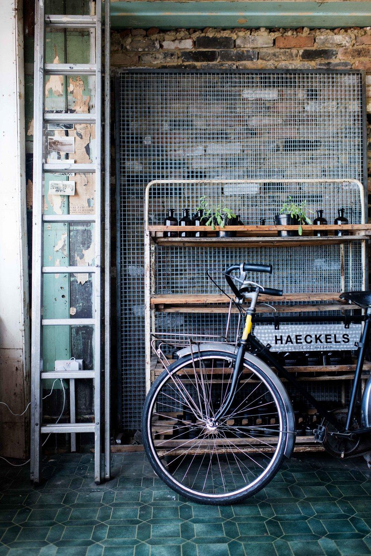 Haeckels.jpg