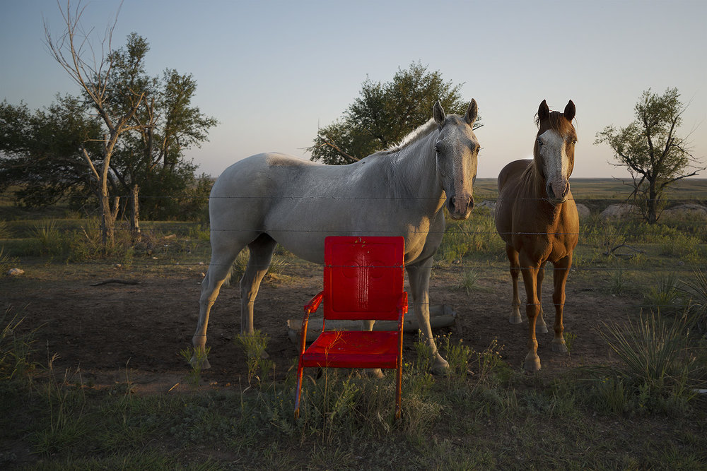 Horses of the Red Chair