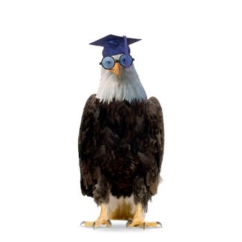 Eagle Wearing Graduation Cap