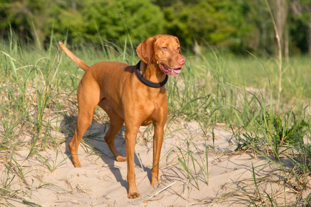 dogtelligent, connected collar, dogtelligent connected collar, smart dog collar, lake michigan business photography, business photography, business photography grand rapids, seamless accelerator photography, photography seamless accelerator, grand rapids business photos, business photos grand rapids, grand rapids business photography, business photography grand rapids, grand rapids business photographer, business photographer grand rapids (5)