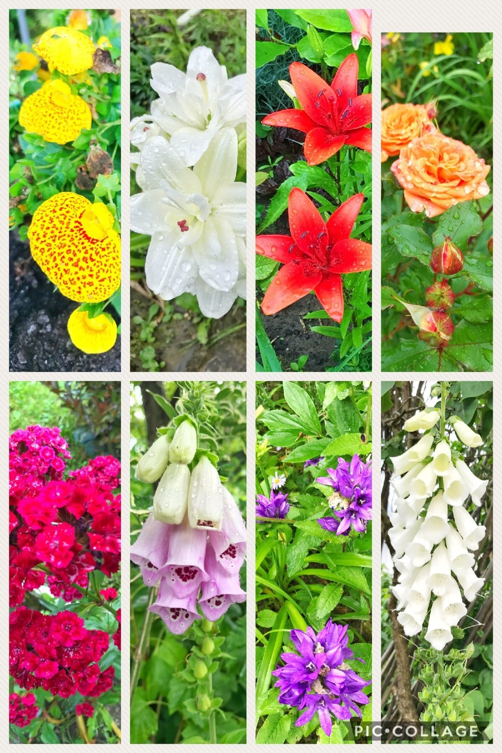 All of these beauties were found in a lovely garden of one of the homes we visit each year. It was definitely a highlight of the trip to gaze on God's amazing creations. :)