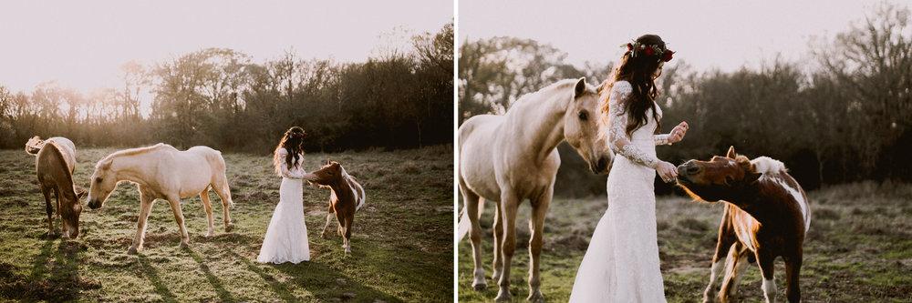 shields horse whisperer.jpg