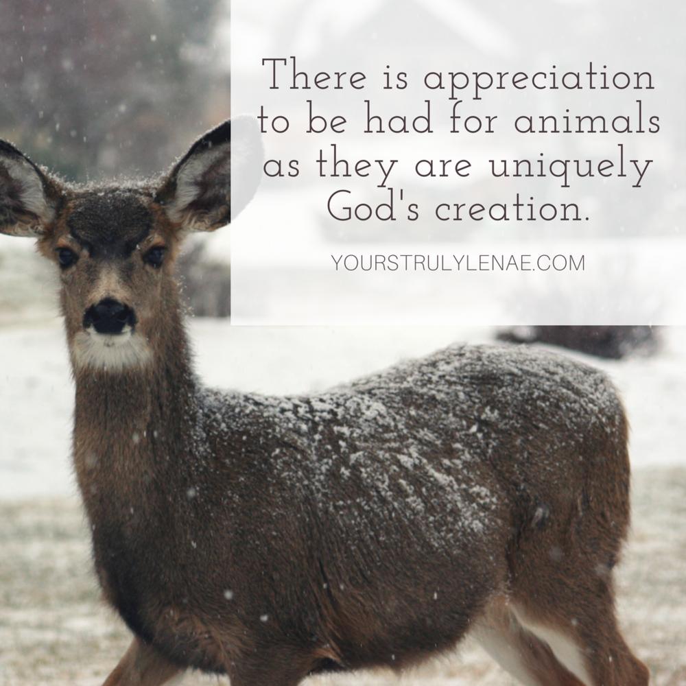 Animals Deer