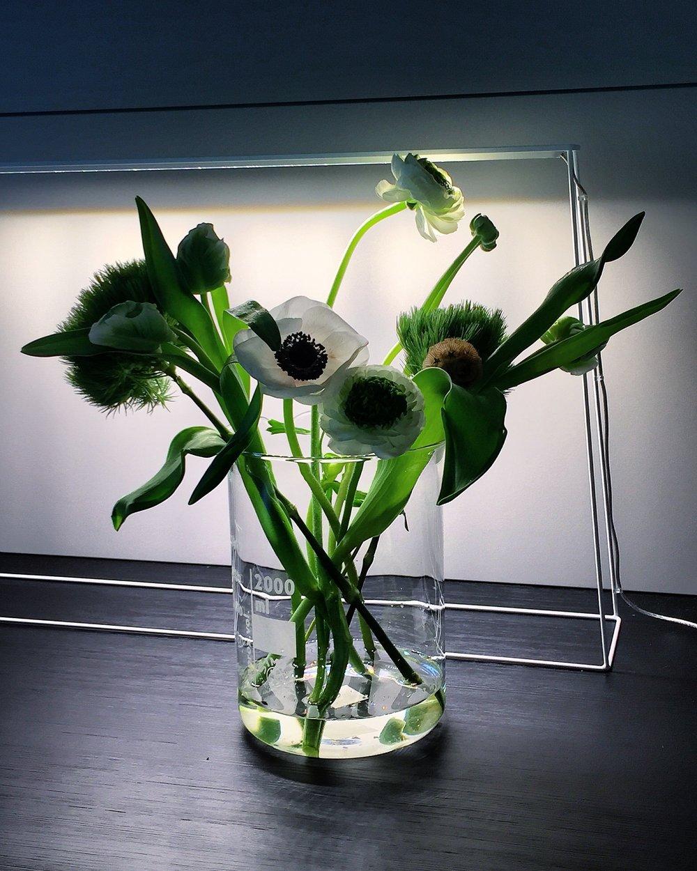 IMG_5062Lumi.Flowers2.jpg
