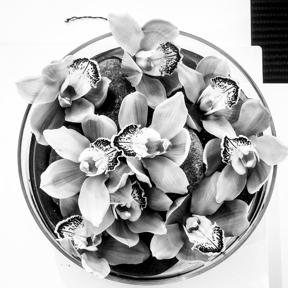IMG_2371BW.orchidshighexposrue.jpg