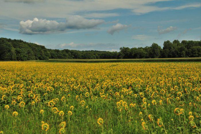 This beautiful farm is located in Paris, Illinois