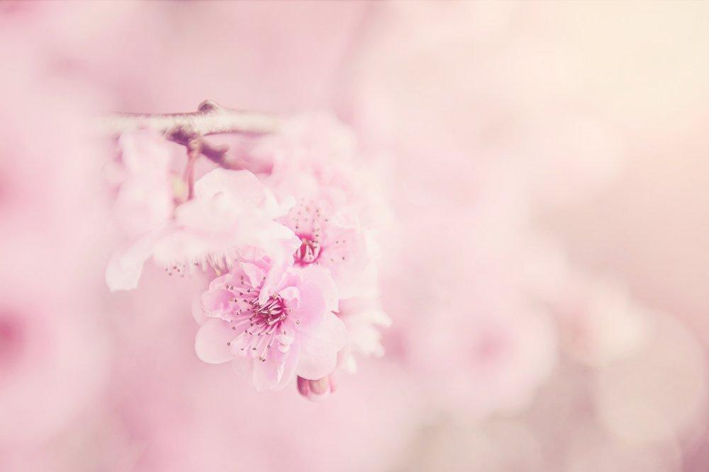 beautiful-bloom-blooming-567973.jpg