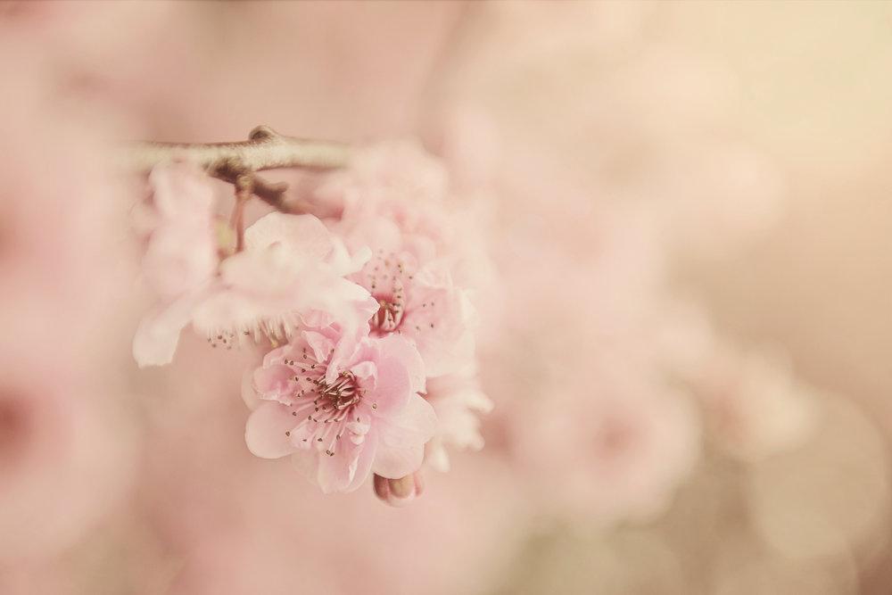 beautiful-bloom-blooming-567973_2.jpg