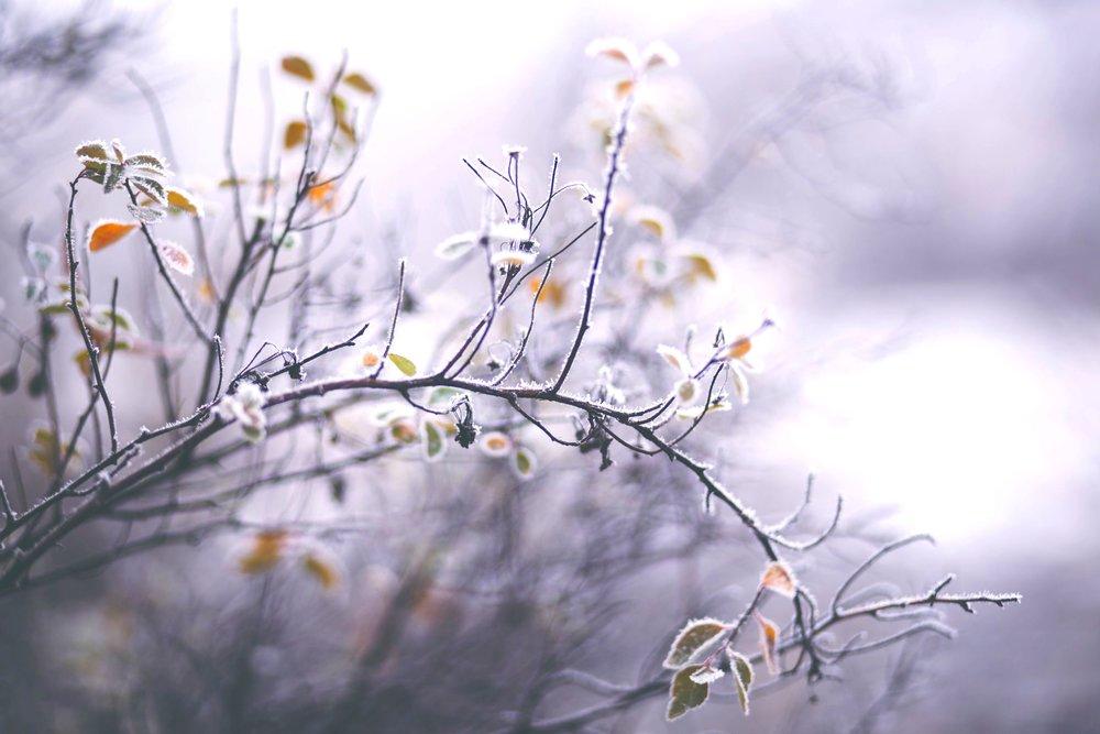pexels-photo-295771.jpeg