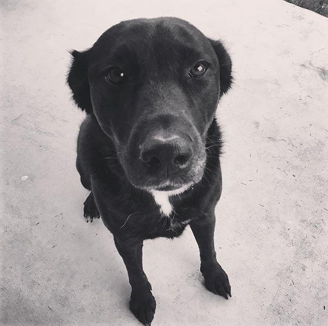 No one loves like Jetson. #dogsofinstagram