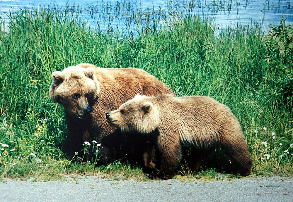 Mother Bear and Cub - via  Brocken Inaglory