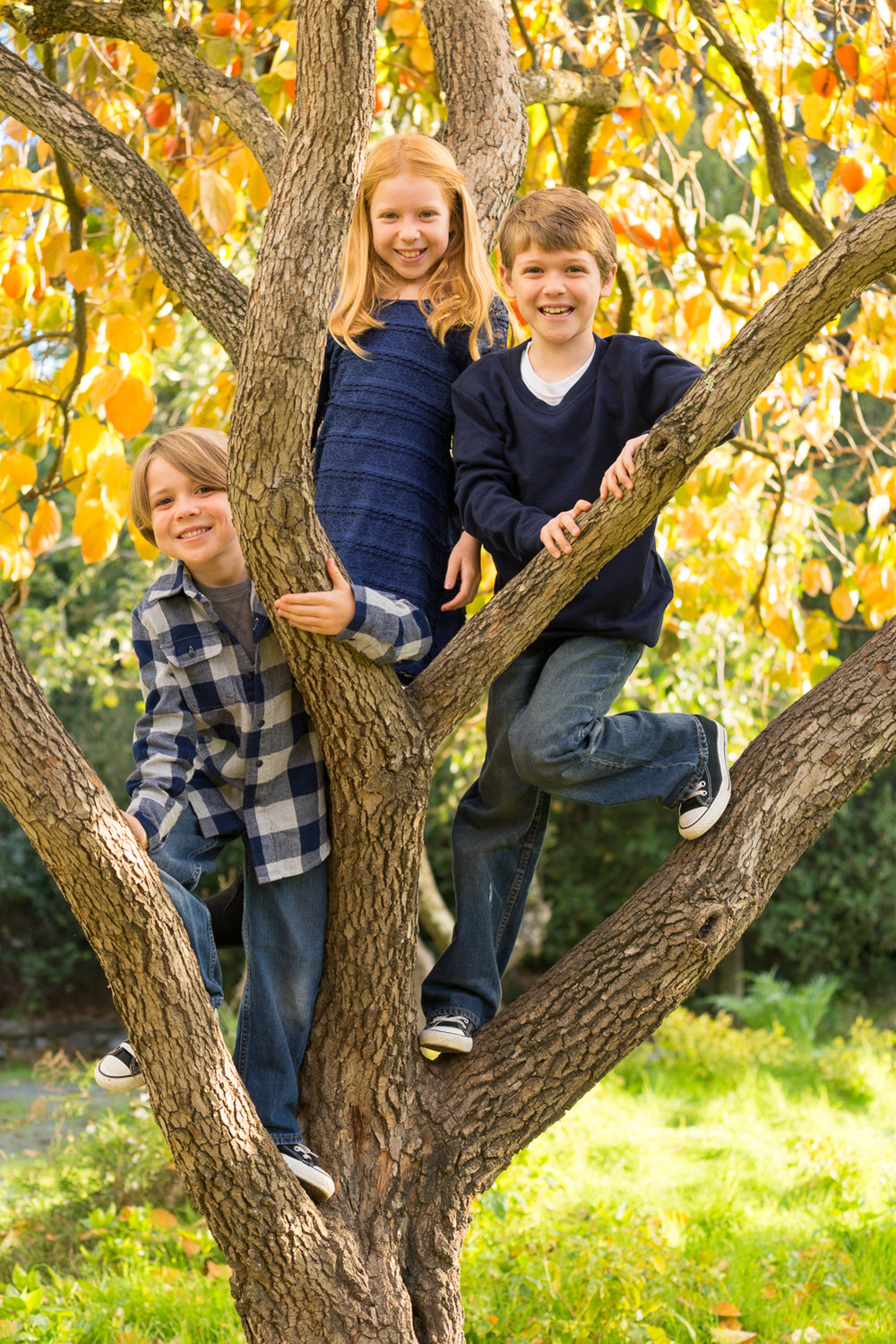 3 children in a tree-San Ramon family photographer