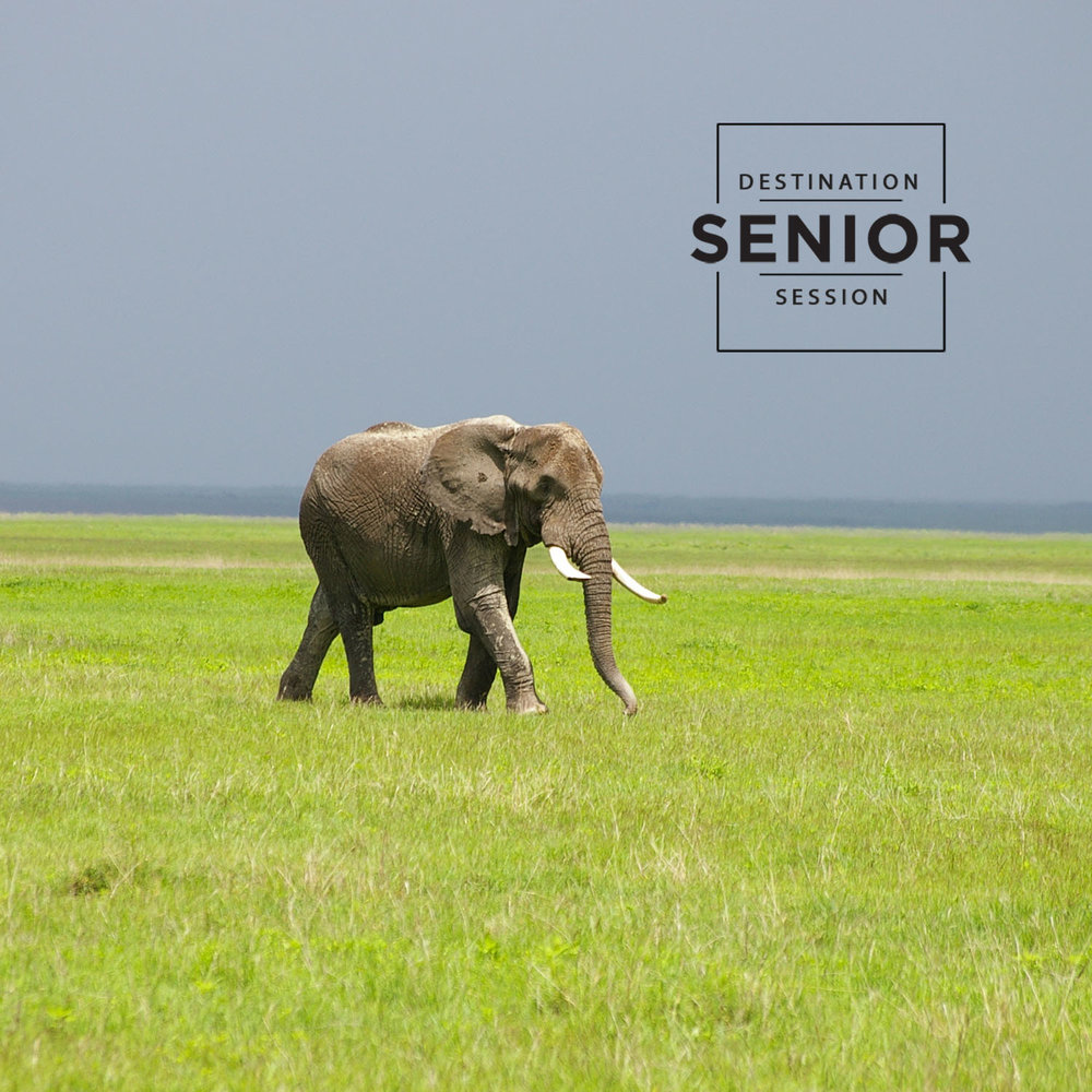 Serengeti Tanzania - destination senior photographer