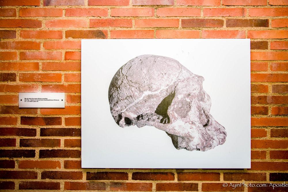 African ancestor Skull