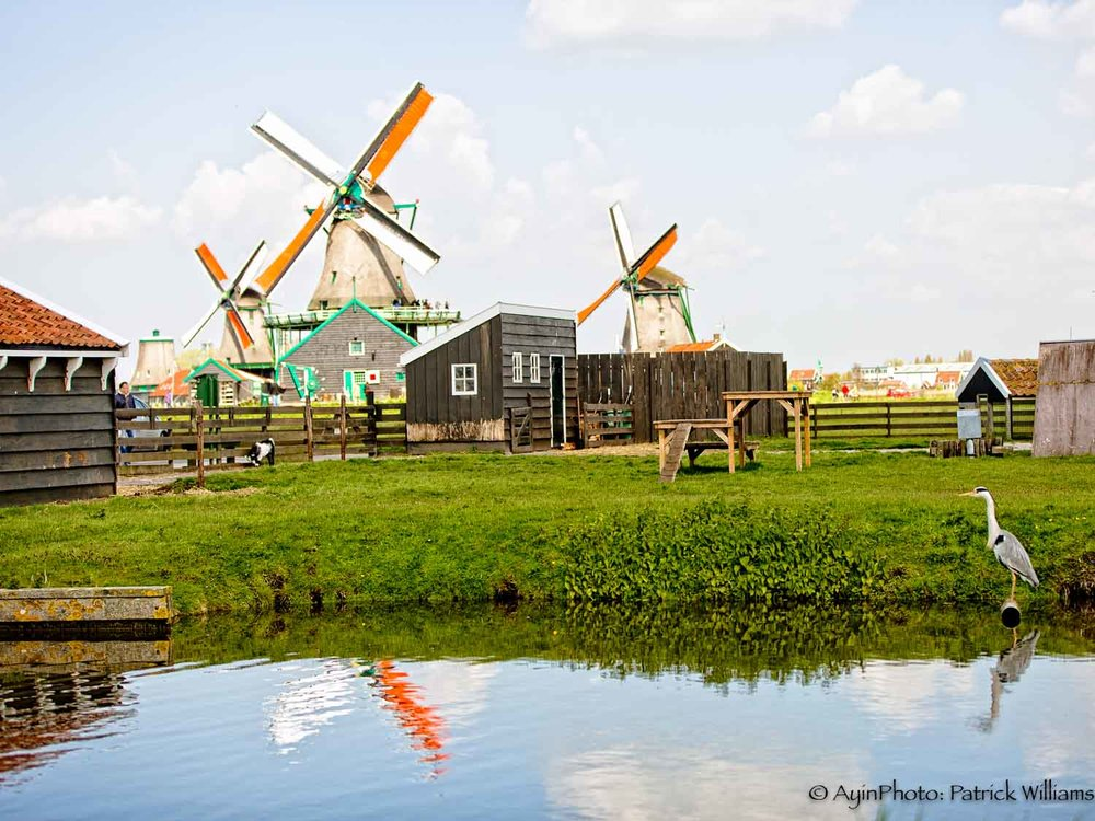 Windmill Farm-.jpg