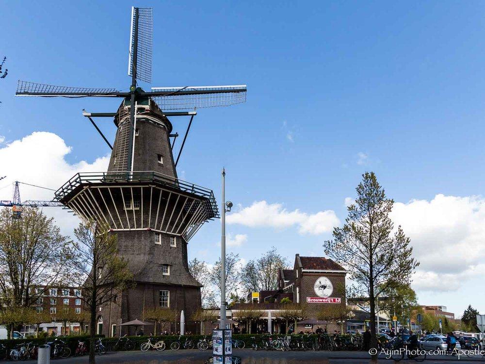 Windmill Restorant 74A3117-.jpg