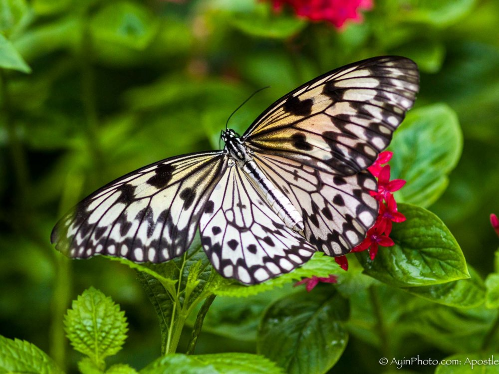 Florida BW Butterfly-0044.jpg