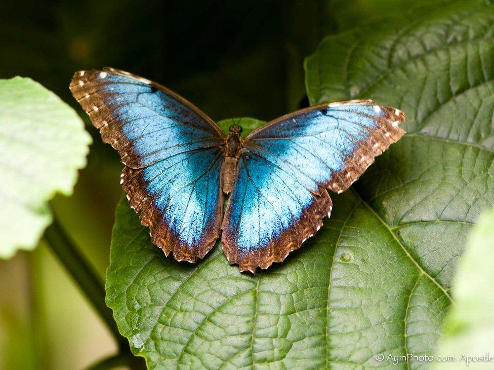 Florida BW Butterfly-0059.jpg