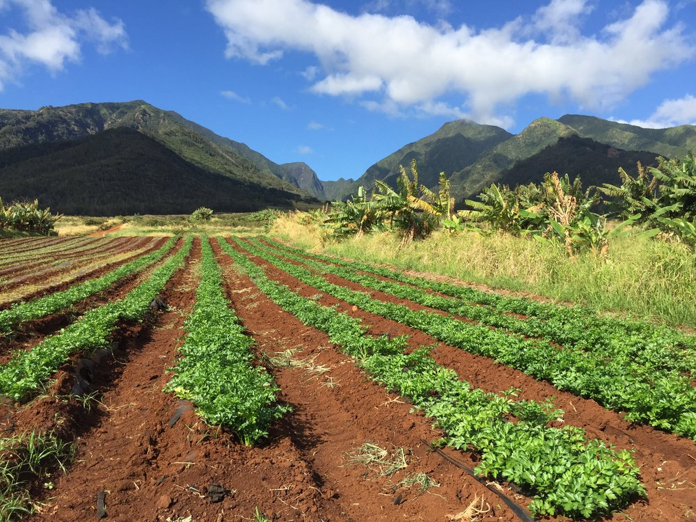 kumu_farms_fields04.jpg