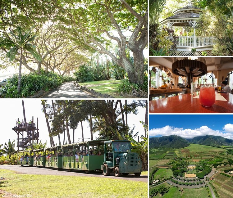10 Great Spots on Maui to Pop the Question — The Mill House