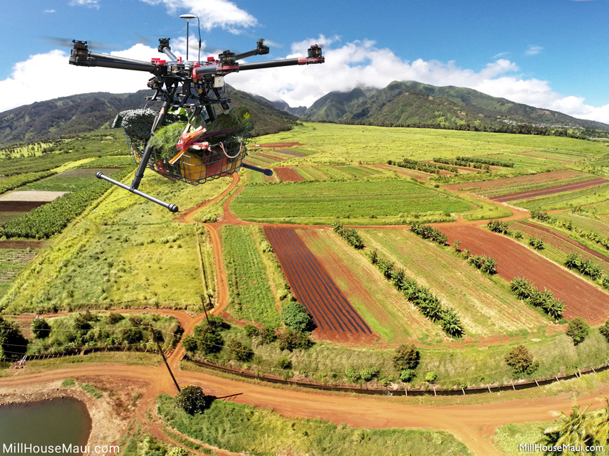 drone to table maui