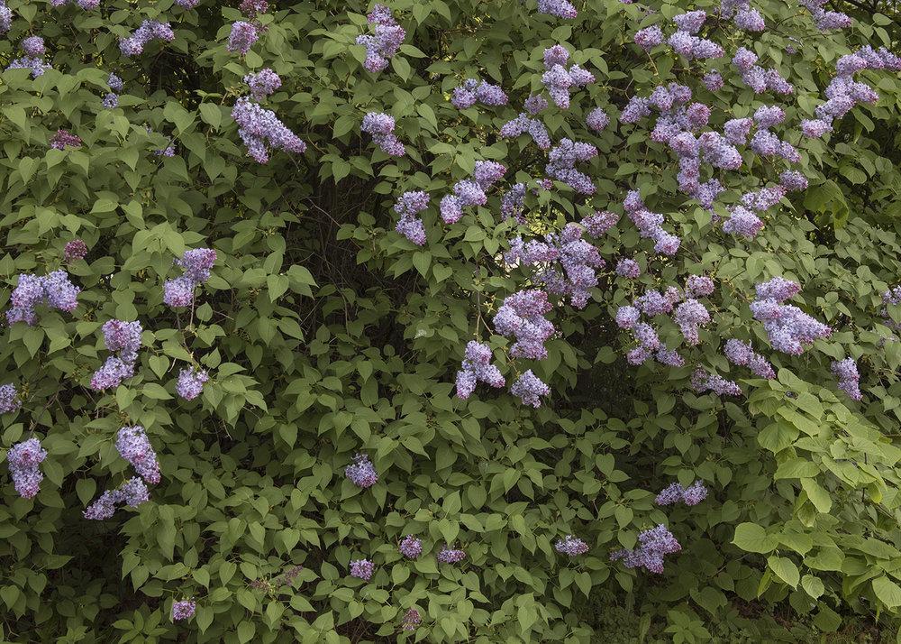 Gulskogen gård blomster
