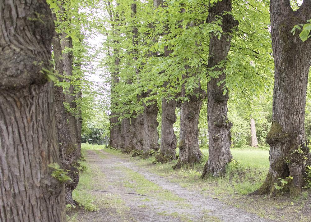 Gulskogen gård trær