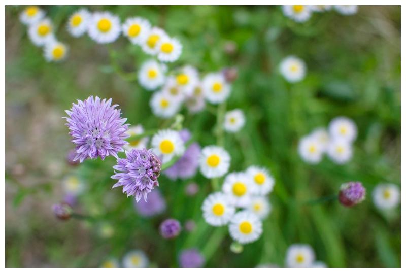 2012-05-15_003.jpg