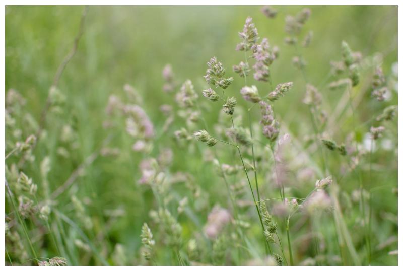 2012-05-15_020.jpg