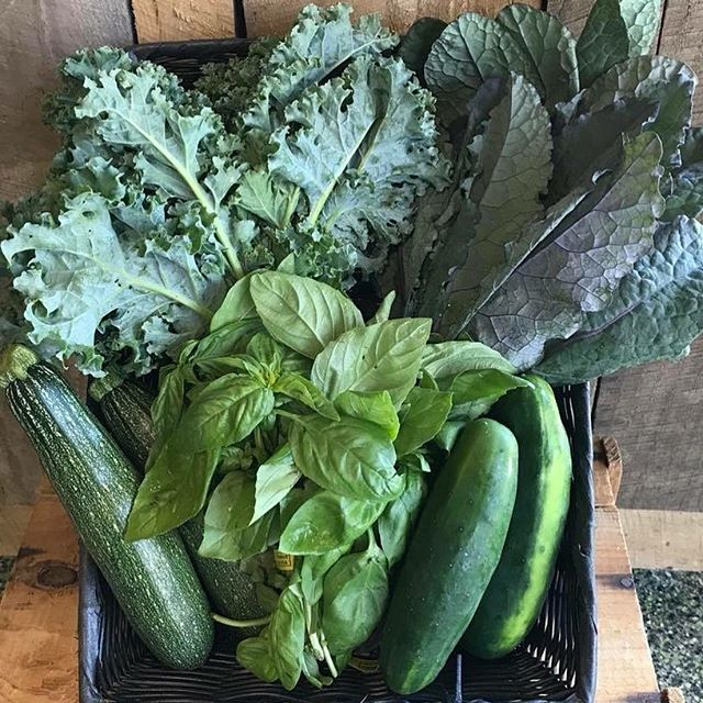 JAH'S CREATION Organic Farm - just picked farm to Pangaea Naturals: kale, cukes, basil & zukes!! COME AND GET IT!!!