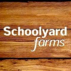 Schoolyard.jpg