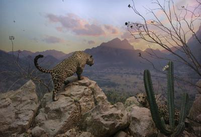 108_jaguar122
