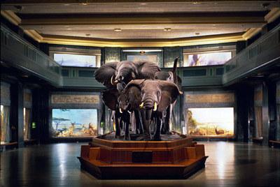 Elephantsakeleyscottfran