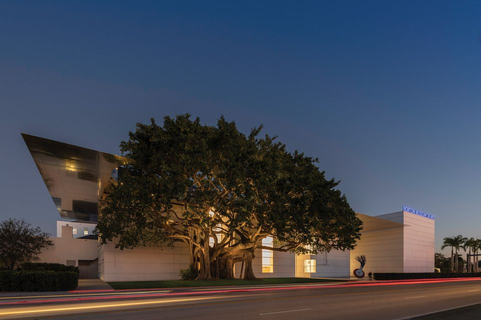 The banyan tree along the South Dixie Highway entrance to the Norton Museum of Art. Photo: Nigel Young .