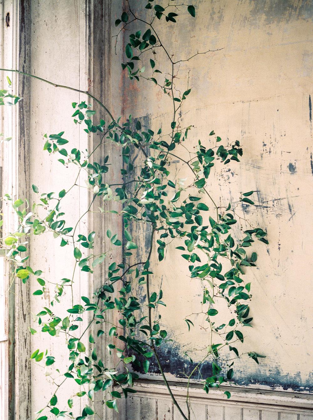 Fine Art Floral Design - Olive Grove Design - 00004.jpg