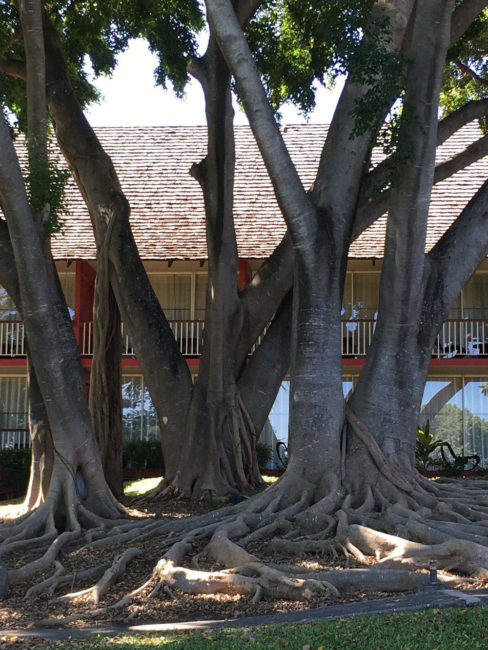 lemer_tree.jpg