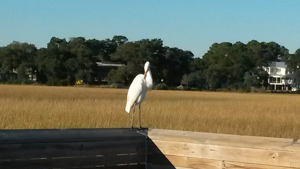 Egret enjoying early Spring sun